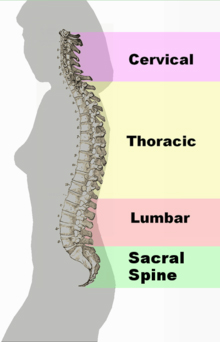 spinal-problems-pic1